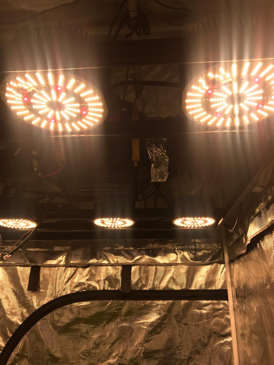 CannaBuzz | Lighting - LED's Feed
